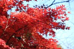 2010紅葉