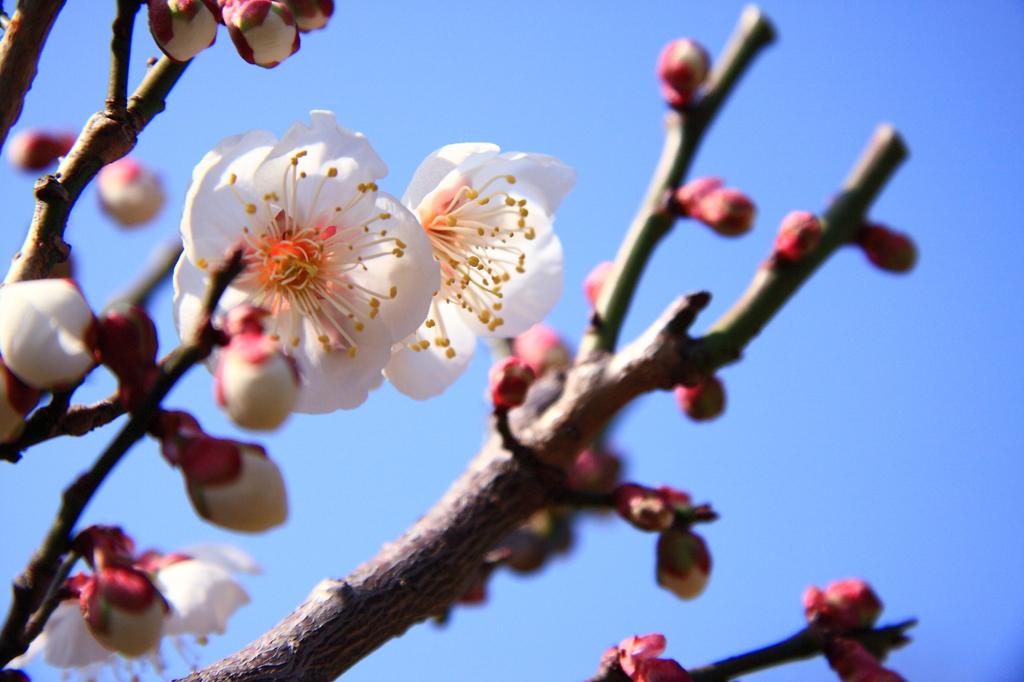 春を切り撮る