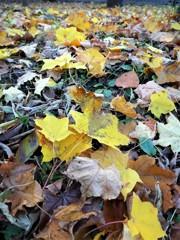 散歩道紅葉