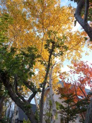 散歩道 紅葉