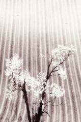 平成二十二年五月 丘の春
