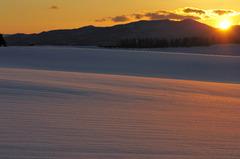 煌めきの雪原