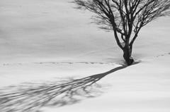 丘の孤木-2013 冬 《Monochrome-D800E版》