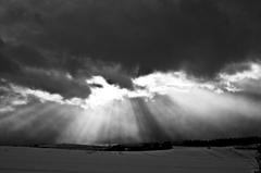 光降る雪原