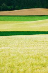 折り重なる緑の丘
