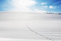 Footprints on the Snow Field