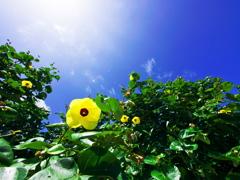 夏!! 見上げる - 2013 久米島