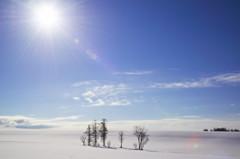 冬日、再び・・・ 《D800E版》