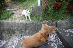 ナナと猫の遭遇