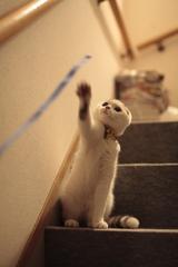 だって ネコだもん!