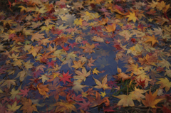 水に浮かぶ秋。