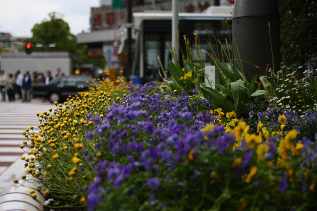交差点脇の花