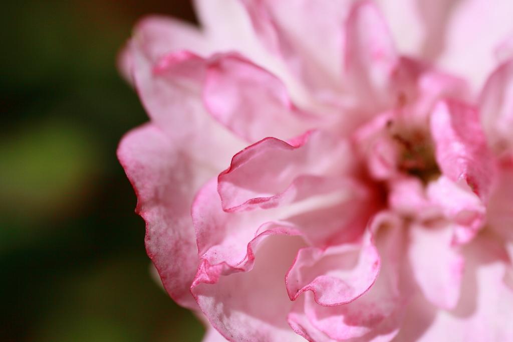flower(unknown)