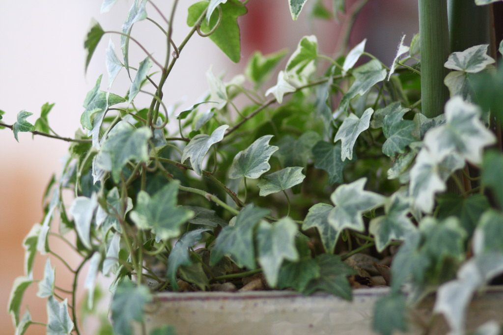 部屋の鉢植え