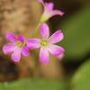 名前は分からないけれど、可愛お花です