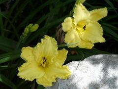 双子の花の影と光