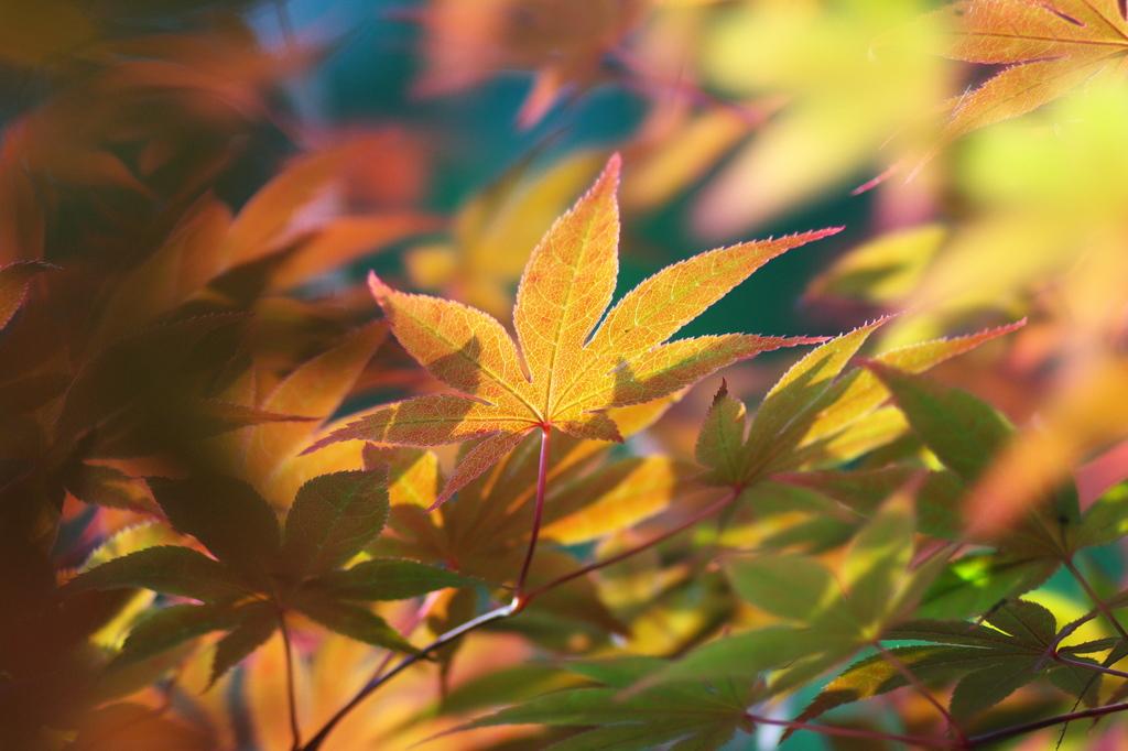 新緑紅葉2