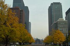 Tokyo駅を抜ける風