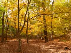 紅葉の森(4)