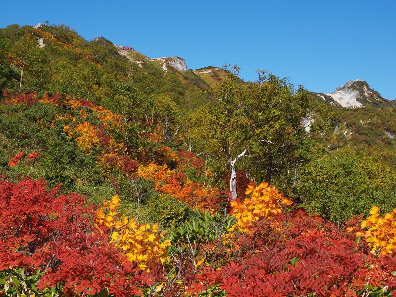 燕山荘と紅葉