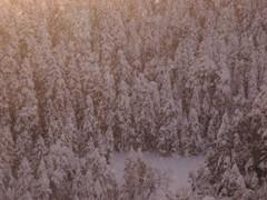 冬の北横岳にて(Scene31/40)