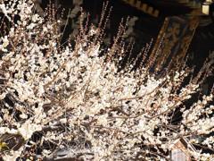 天満宮の春