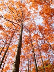 紅葉の森(3)