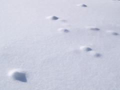 冬の北横岳にて(Scene14/40)