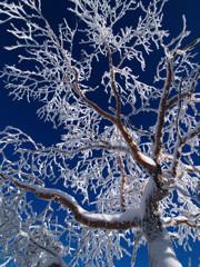 冬の北横岳にて(Scene17/40)