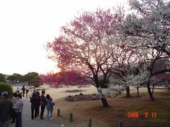 水戸偕楽園の梅祭りDSC00047