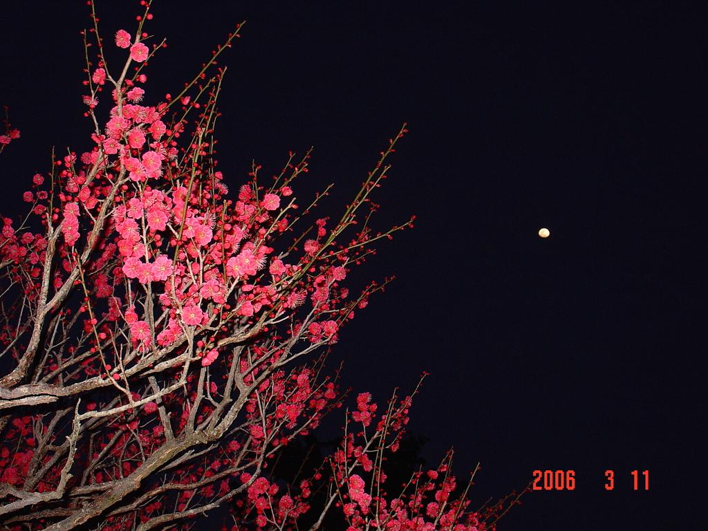 水戸偕楽園の梅祭りDSC00009-0001