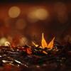 Autumn Lesves