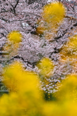 FlowerScreen
