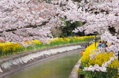春花の競演