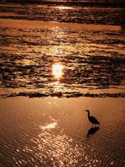 夕日に染まった水辺と水鳥