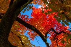 秋空を彩る