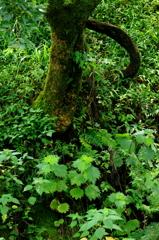 苔のある木