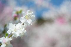 春の陽を受けて