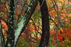 猪ノ口湖畔の紅葉