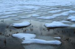 ビオトープの雪紋様