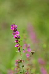 湖畔に咲く花