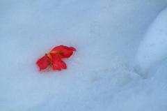 雪上を飾る赤
