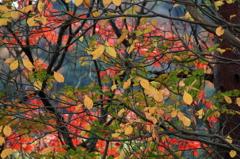 秋色の配色