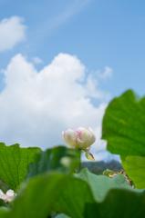 花蓮と夏空
