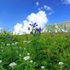 花咲く高原