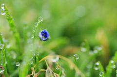 早春の野に咲く