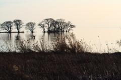 湖北・冬Ⅱ