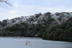 猪口湖の冬