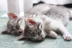 良く寝る子で 猫