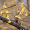 春の訪れ、香る仲で